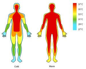 q es la temperatura corporal